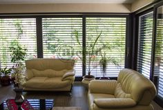 Wood Blinds - Blinds and Shades -