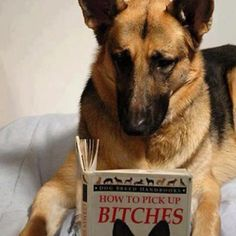 Gotta love dog humor