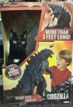 Crazy Cat Lady, Crazy Cats, Black Cat Humor, Scottish Fold, Cat Boarding, Cat People, Christmas Cats, Godzilla, Animal Pictures