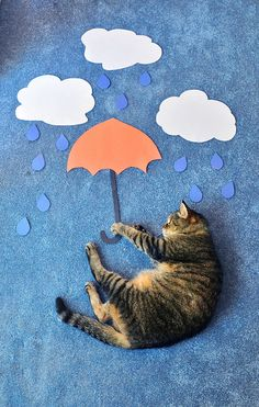 Rainy cats    WHITE FLUFFY CLOUDS AND DON'T EVER FORGET YOUR ORANGE UMBRELLA.............ccp