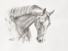 Graphite drawing of beautiful horse, Tigger. by Felicity Deverell fine artist.
