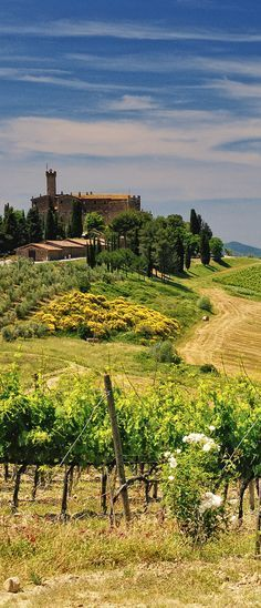 4 MAGICAL VINEYARD VILLAS IN TUSCANY ITALY