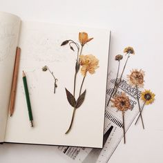 pressed flowers in a notebook // artsy tumblr hipsters beige aesthetics
