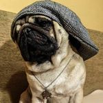 351 Followers, 817 Following, 120 Posts - See Instagram photos and videos from Maurice the Pug (@maurice.thepug)