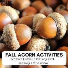 Learn with these fun and hands on acorn activities for preschoolers. Collect your own acorns for math and science or try acorn art. A great way to engage elementary aged kids using simple fall objects! STEAM activities for the classroom or home. Fall Preschool Activities, Preschool Projects, Nature Activities, Holiday Activities, Science Activities, Motor Activities, Family Activities, Cool Science Experiments, Science Art