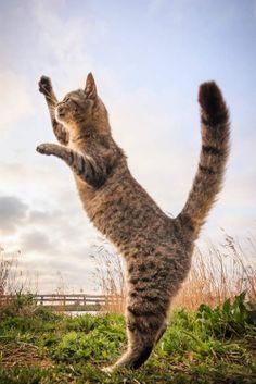 《貓跳躍寫真集》這按下快門的瞬間也太難抓了吧(皺眉)