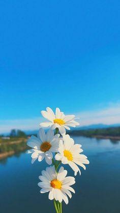 Flor con  el cielo