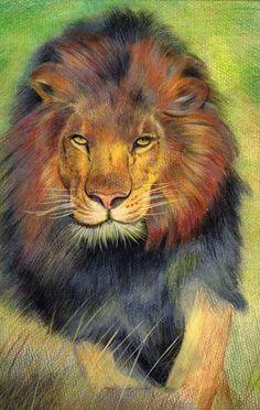 Custom Pet Portraits - Original Color Pencil Art - Wild Animal Lion by Pet Pet Paint,