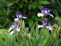 Dual-coloured iris.