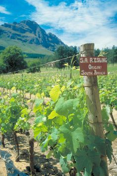 South African wines are increasingly finding their place at the table - Connecticut Post