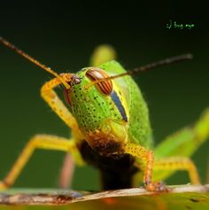 saluter by bug eye :) on 500px