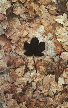 All The Leaves Are Brown. Land Art, Art Et Nature, Black Leaves, Foto Art, Environmental Art, Natural Forms, Art Plastique, Belle Photo, Fall Halloween