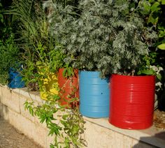 Recycled tins are painted in bright coloured and used as planters, filled with lush green plants