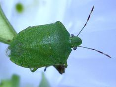 Insects, Plant Leaves, Home And Garden, Vegetables, Nature, Plants, Animals, City Scapes, Gardening