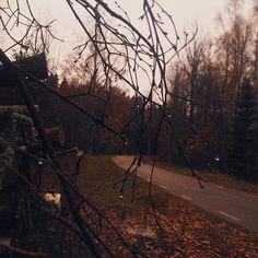 autumn leaves - cohosh