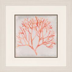 Watercolor Coral IV Framed Painting Print