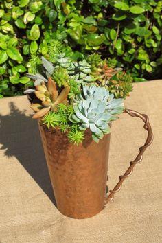 Succulents in copper container. LaurasLittleGardens.com