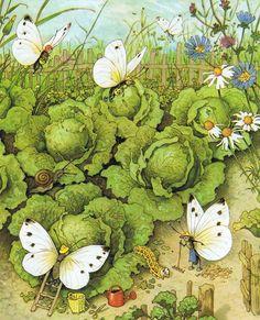Fritz Baumgarten, Butterflies working in their Garden Art And Illustration, Fairy Land, Fairy Tales, Baumgarten, Elves And Fairies, Flower Fairies, Woodland Creatures, Illustrators, Art For Kids