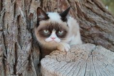 The Daily Grump | January 4, 2013  Grump On A Stump    So cute, and freakishly like my Bella!