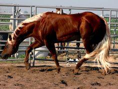 """Jumping G Whiz"" Flaxen Liver Chestnut NRHA Money Earning Reining Stallion Standing at: Ackerman Performance Horses"