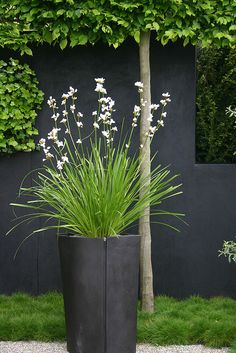 Grey walls in the garden, helps the green to really pop!