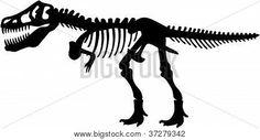 Esqueleto de dinosaurio de T.Rex Rex tiranosáuridos