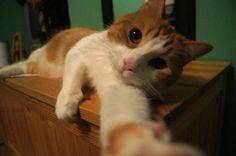 TOP 10: ¡¡¡Selfies de animales!!! – La voz del muro