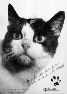 In 1963, Félicette became the [first cat in space](http://history.nasa.gov/animals.html). Apparently she was a [sweet-tempered street cat from Paris](http://www.purr-n-fur.org.uk/famous/felix.html), until the French government started putting her and 13 other kitties through training that included compression chambers and centrifuges. On October 18, Félicette was launched into space inside a special capsule on a French Veronique AG1 rocket, while an electrode array implanted in her brain ...