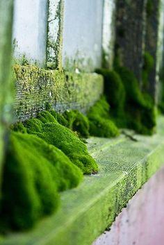 Undisturbed by Helen K. Passeymoss on window sill Flora, Moss Garden, Window Sill, Window Ledge, Fungi, Botany, Shades Of Green, Mother Nature, Beautiful Places