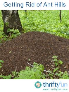 killing ants ants and how to get rid on pinterest. Black Bedroom Furniture Sets. Home Design Ideas