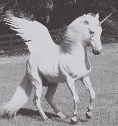 Unicorn pegasus!