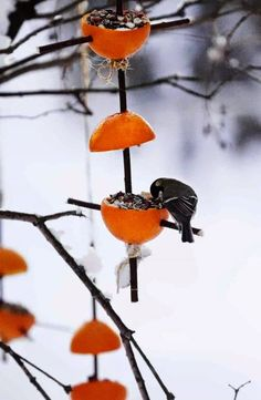 Easy Bird Feeders by Ulla Vestola: Use your leftover orange rinds to feed your neighborhood birds