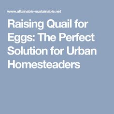 Raising Quail for Eggs: The Perfect Solution for Urban Homesteaders