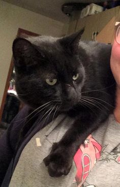 Missing! Our cat Tyoma, who goes for walks on his own, hasn't been home in 6 days (since April the 28th). This never happened as he leaves in the morning and returns in the evening. He is usually around East 26th and Z. He is super friendly, and will go up to people to sayRead More