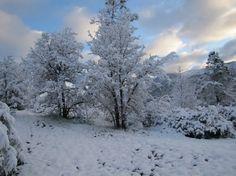 Winter wonderland! #winter #snow