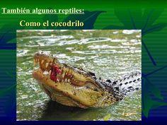 También algunos reptiles: <ul><li>Como el cocodrilo </li></ul>