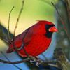 Attract Songbirds to Your Winter Garden    A cold winter day is perfect for curling up by your living room window to watch a colorful parade of songbirds stop by your feeders for a meal. Here's a quick rundown of the most common backyard birds and their favorite things to eat.
