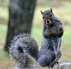 www.facebook.com/finickysquirrel - This is the amazing world of the Finicky Squirrel! Join us for food, fun, great DIY and crafty ideas, special offers & more