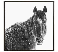 "Snowy Black Horse by Jennifer Meyers, 48 x 48"", Ridged Distressed, Black, No Mat"