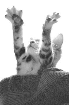 #cats #gracioso