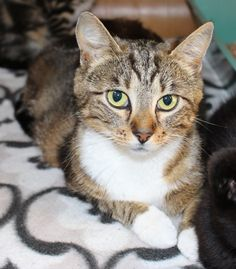 This cat came to us with kittens, now she has been de-sexed to avoid any more unwanted litters!