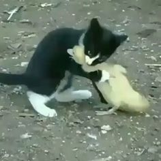 follow @caty.dogy  to see more video.. #cat #caty #cats #animals #animal #dog #dogs #dogy #dogy #catydogy #puppy #puppies #kittenfunny #kitten #kittenplay #kittenlove #catalunyagrafias #catsofinstagram #cutecats #cutepuppies #funnykitten #funnymemes