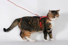 Leinenspaziergänge mit der Katze