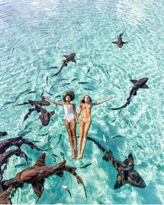 Travel destinations Beautiful places Adventure travel Travel photography Places to travel Travel inspiration Places To Travel, Travel Destinations, Places To Go, Shark Swimming, Excursion, Best Friend Pictures, Travel Aesthetic, Dream Vacations, Summer Vibes