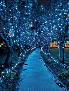 Glowgetter: Christmas Lights at Van Dusen Botanical Gardens and Winter OOTD – CravenWild Scenery Wallpaper, Nature Wallpaper, Aesthetic Backgrounds, Aesthetic Wallpapers, Illumination Noel, Photo Bleu, Places To Travel, Places To Visit, Beautiful Places
