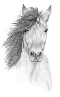 awesome animal pencil drawings - Google Search