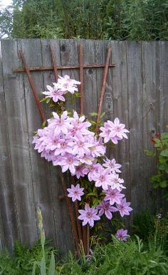 Lovely Clematis!