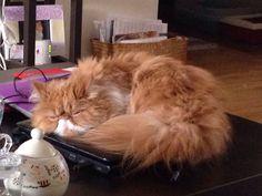 Sleeping on the laptop