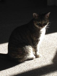 Kitty in the shadows ~ Petal.