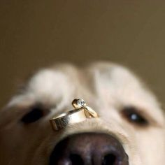 Wedding pictures - The Most Popular Wedding Photos – Wedding pictures Trendy Wedding, Wedding Day, Wedding Rings, Dog Wedding, Perfect Wedding, Wedding Ceremony, Wedding Arches, Wedding Sparklers, Wedding 2015